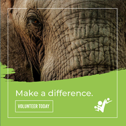 difference-elephant